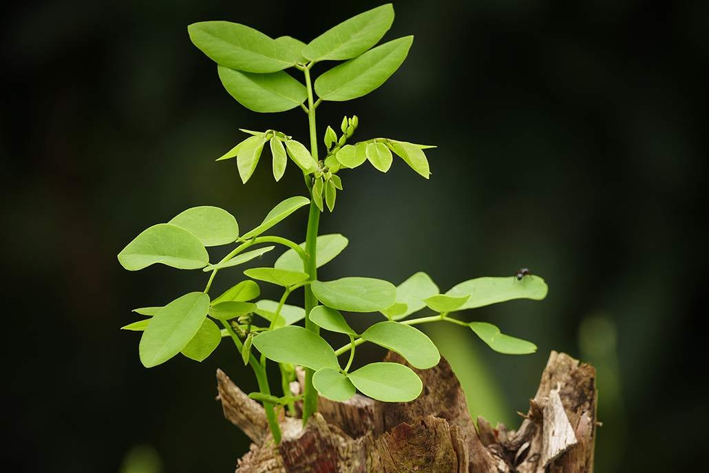 Foto einer kleinen grünen Pflanze